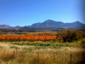 Fall colors beneath the West Elk mountains in Paonia Colorado