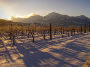 Colorado vineyard beneath the West Elk mountains in the snow