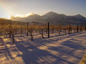 Colorado vineyard beneath the West Elk mountains in the snow