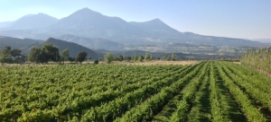 Vineyards by the West Elk mountains at Stone Cottage Cellars in Paonia Colorado