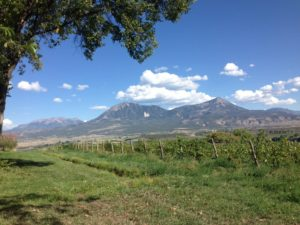 Colorado vineyard near the slopes of Lamborn Mountain near Paonia, CO